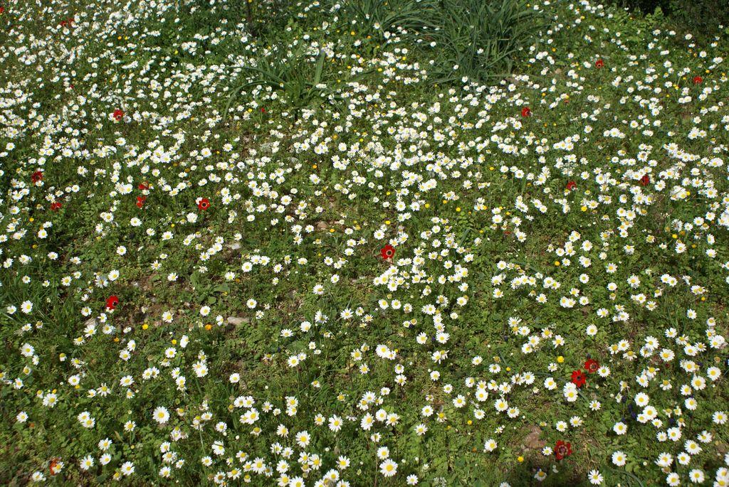 Wilde bloemen in Griekenland